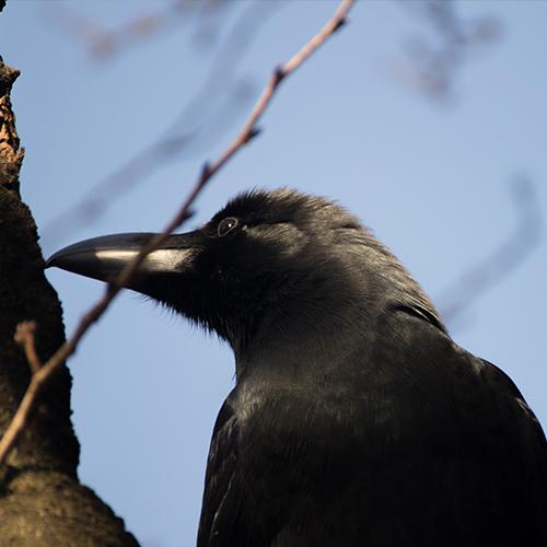 夢見ヶ崎動物公園における鳥インフルエンザ対策について