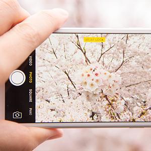 夢見ヶ先動物公園に桜を見に行こう!