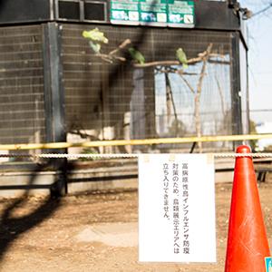 都内の野鳥から鳥インフル検出!夢見ヶ崎動物公園内の対策について