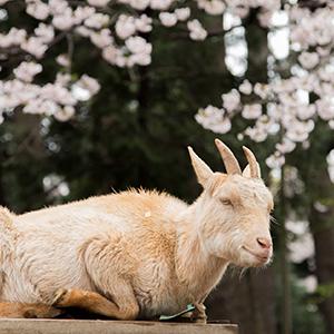 春の動物園まつり