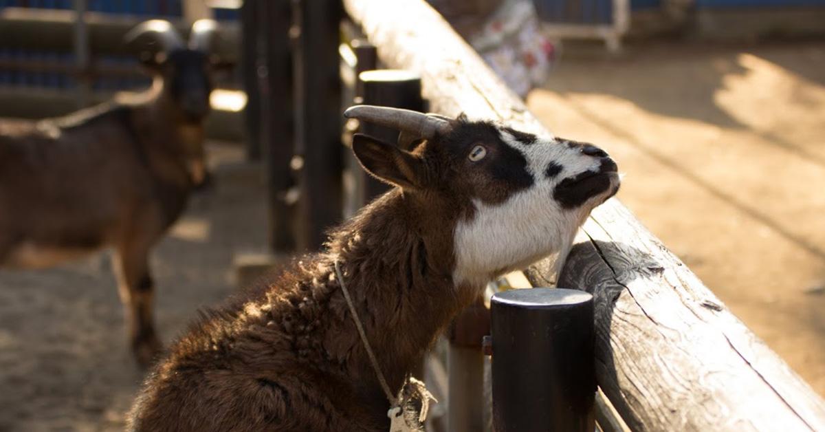 動物たちをもっと身近に!「飼育の日」4月22日に開催!