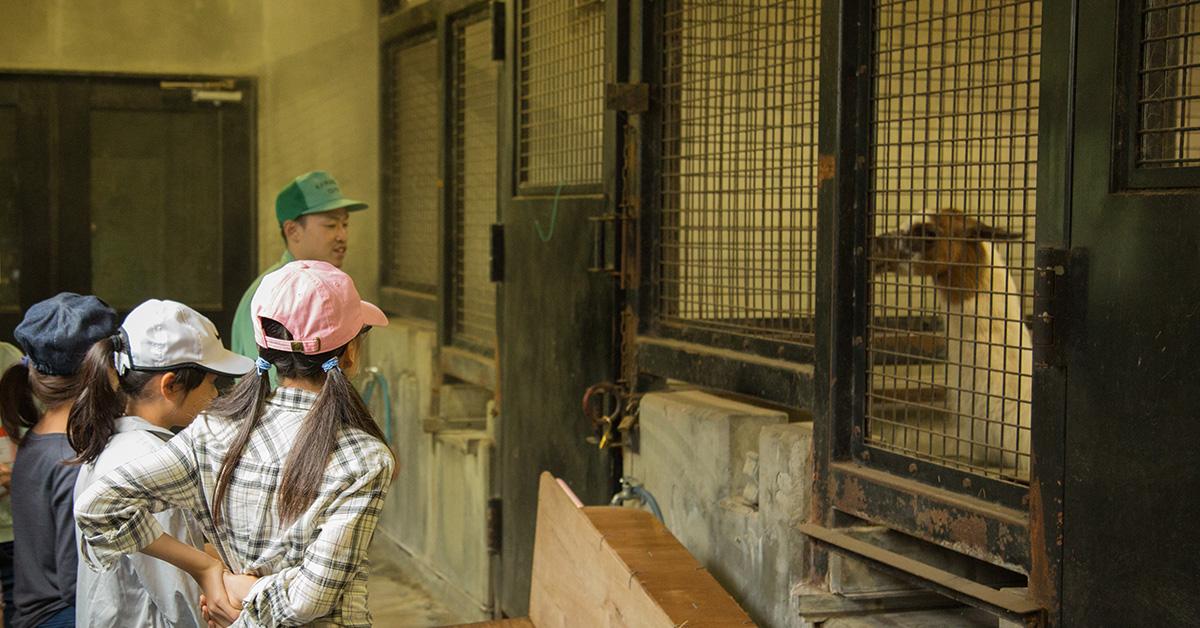 7/28開催の飼育体験ができる『サマースクール』7/17から募集開始