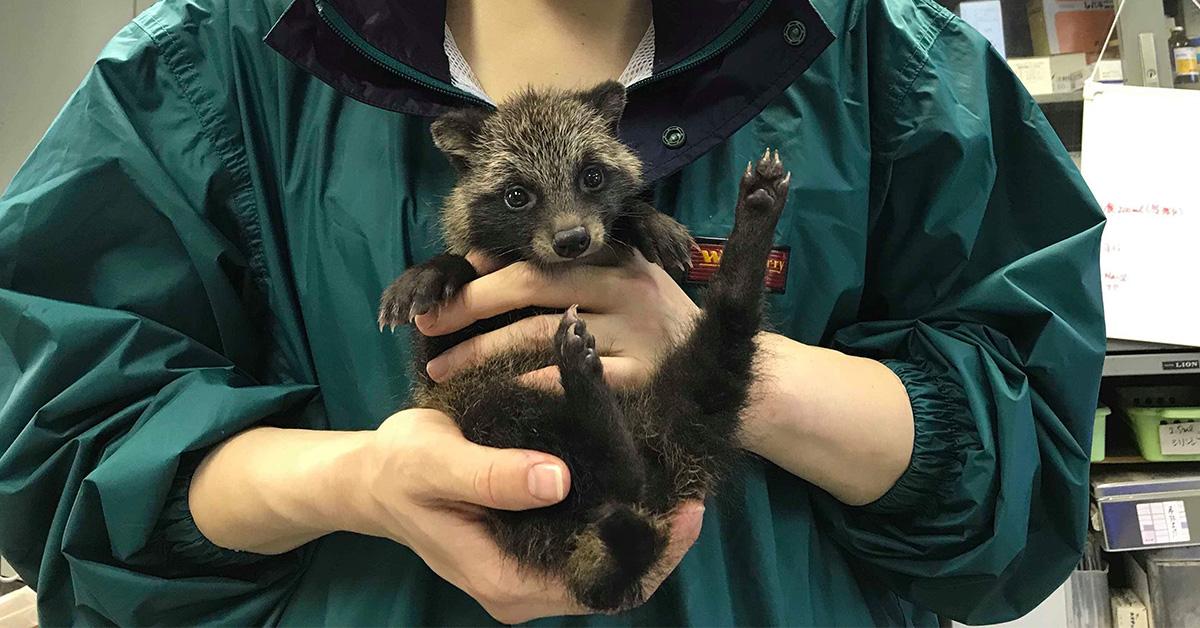 野生動物リハビリテーター第14期生が誕生しました