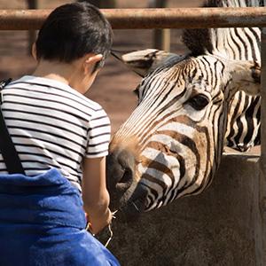 「秋の動物園まつり」10月8日(月祝)開催!