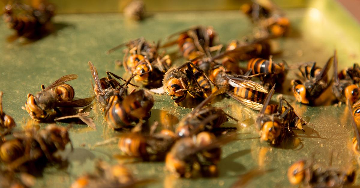 スズメバチに気をつけて