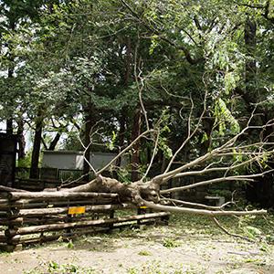 9月9日に上陸した台風15号の爪痕